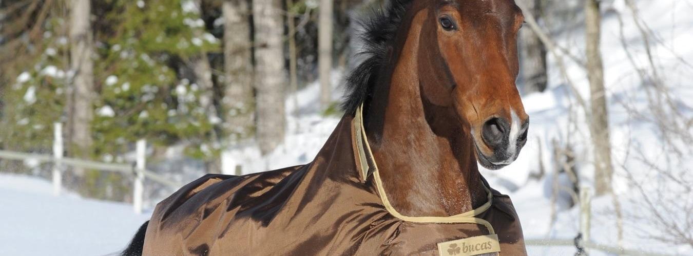 Regendecke Pferd