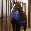 Horseware Duo Liner