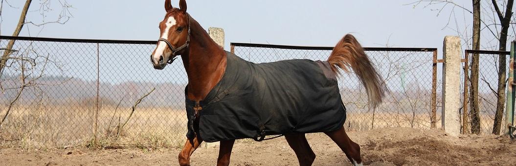 Pferdecken kaufen