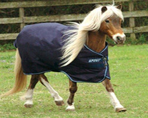 Amigo Bravo Pony