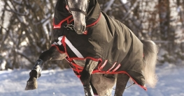 So gelingt die perfekte Pferdeschur