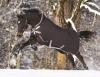 Horseware Amigo Bravo 12Pferdedecke 400g Excaliber with Silver & Red -