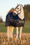 Horseware Mio Stable Rug Lite Weight 150g- Navy/Tan, Groesse:145 -
