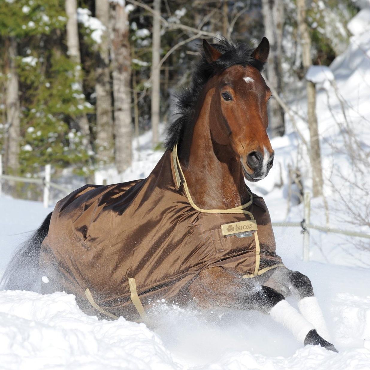 Top 5 Pferdedecken