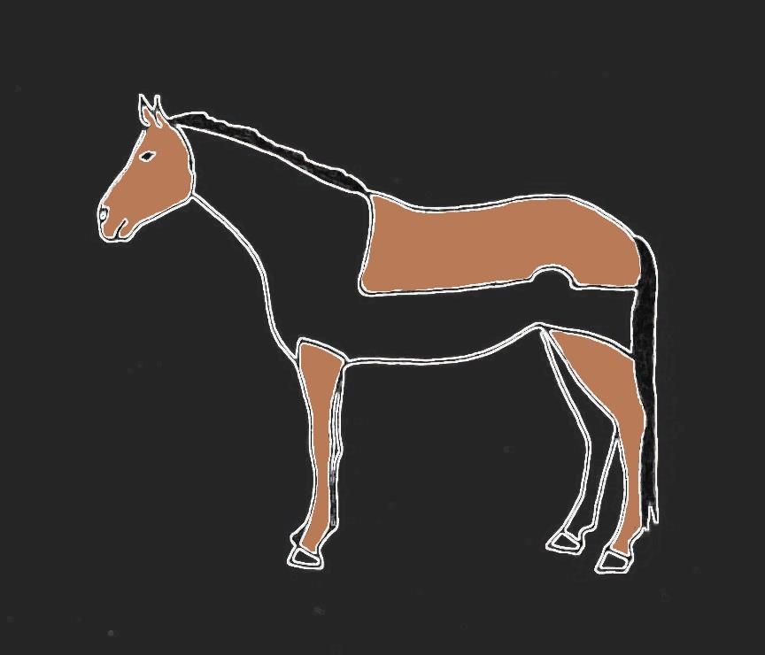 Pferde scheren Deckenschitt