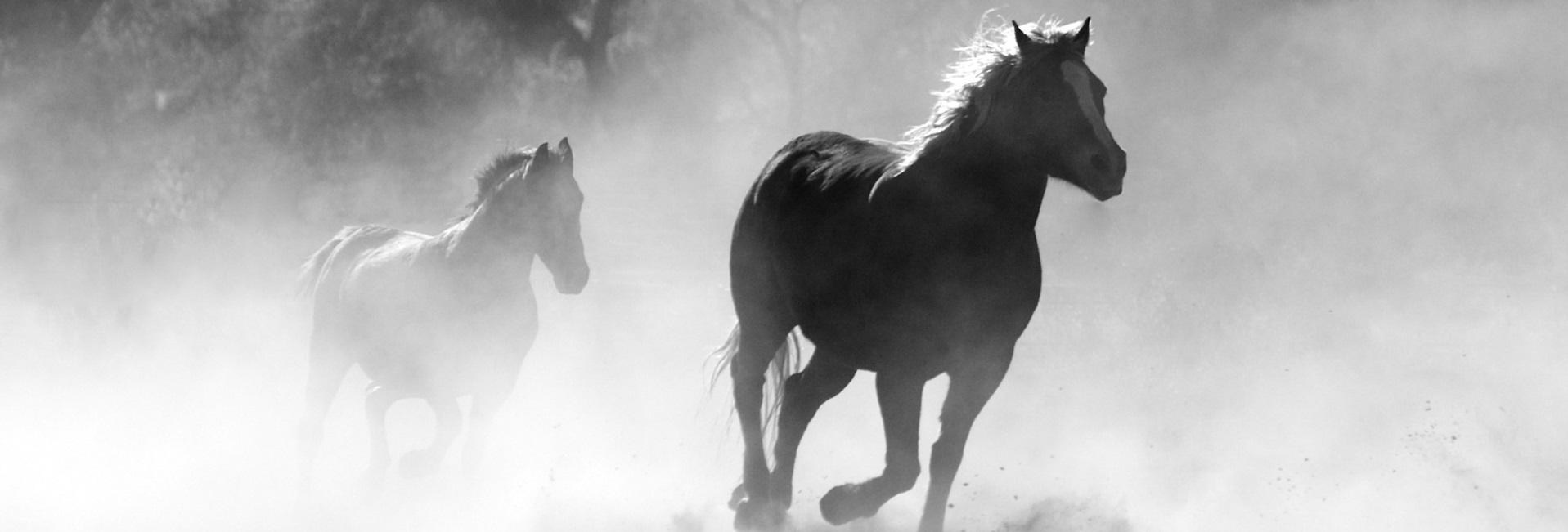 Pferdedecken günstig kaufen
