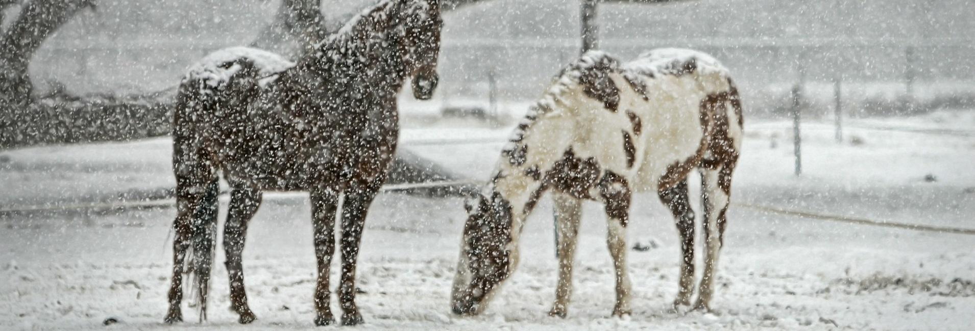 Pferdedecken Vergleich