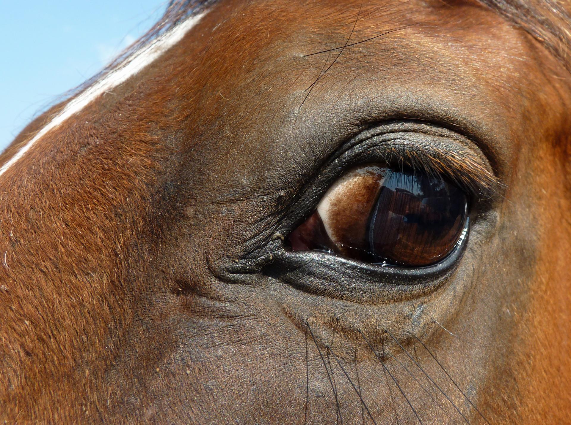 Pferd nervös