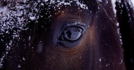 Pferd scheren ja oder nein?