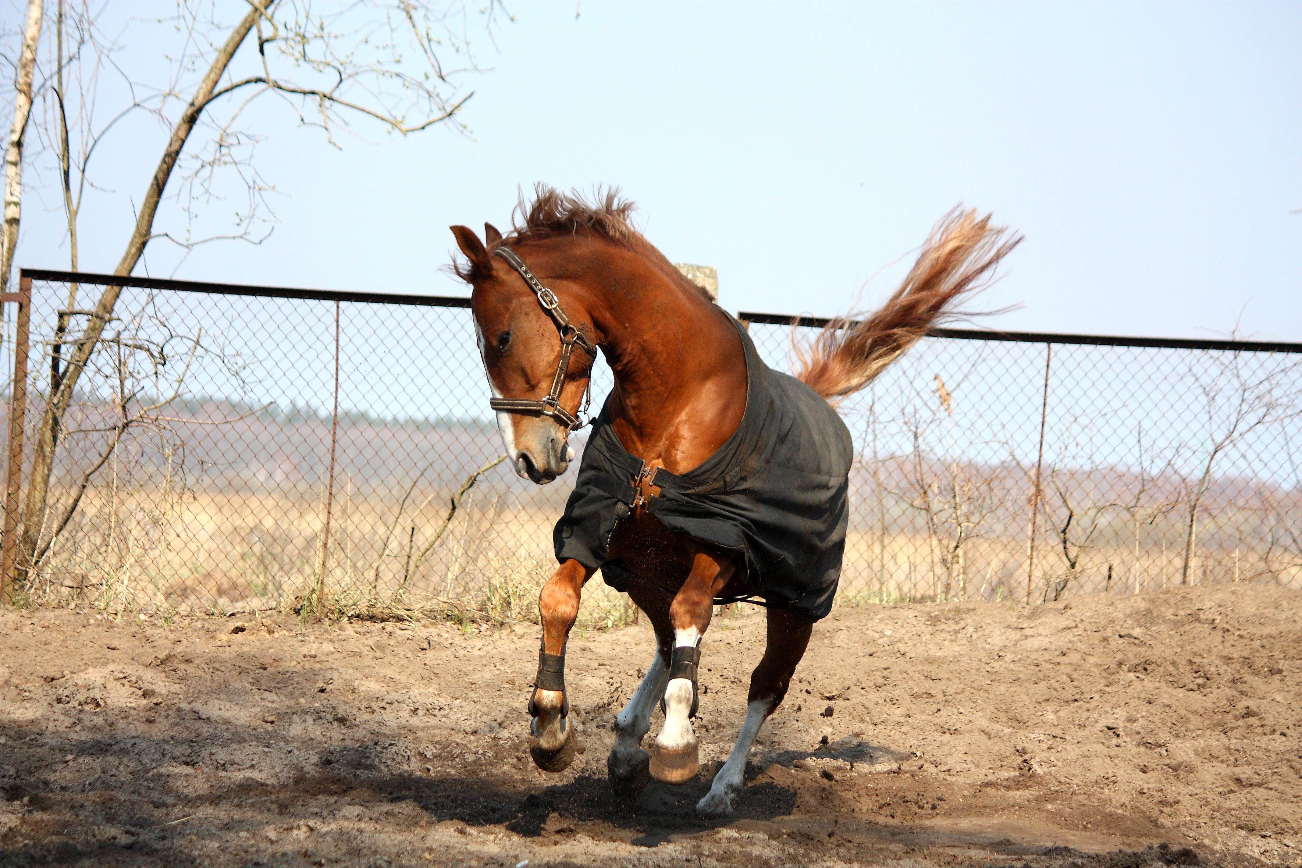 Pferd scheren Pro & Kontra